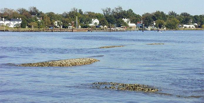 Hamptn-Roads-REST-4018-Oyster-reefs-Elizabeth-River_Dr-Lisa-Drake-695x352