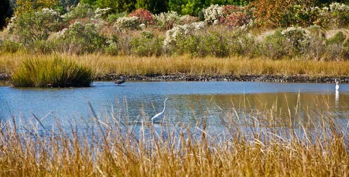 egrets_pleasure-house-point_Jamie-Betts-Trust-for-Public-Land_695x352.jpg