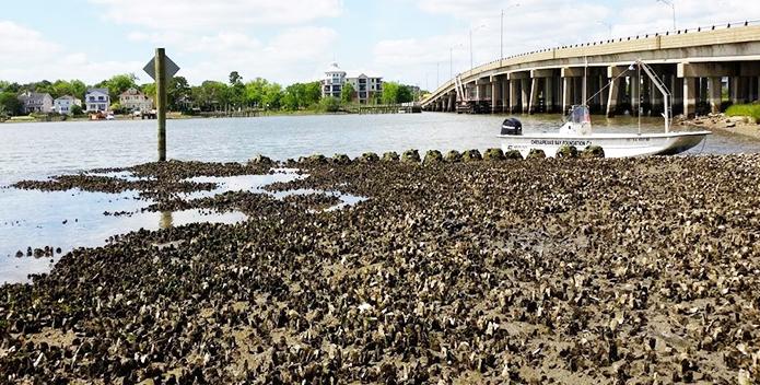 oyster-reef-lafayette-river-granby-street-reef_JackieShannonCBFStaff_695x352