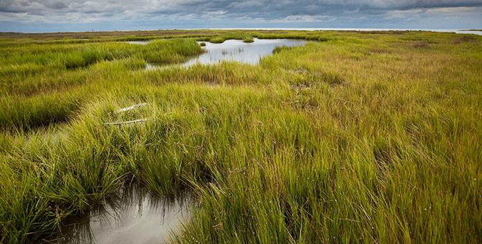 Wetlands-KarineAigner_iLCP-695x352
