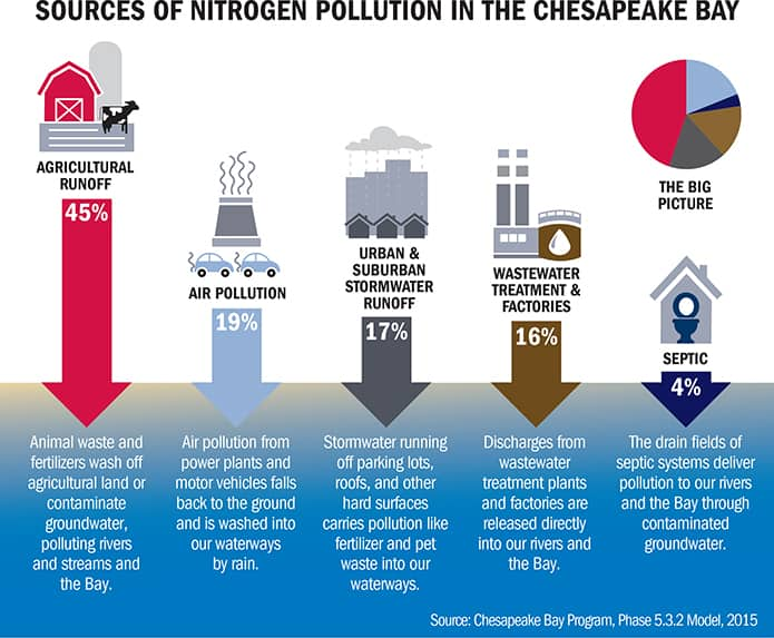 Sources of Nitrogen Pollution in the Chesapeake Bay infographic