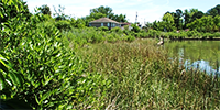 Image of Birdsong Wetlands.